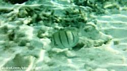 دنیای شگفت انگیز اقیانوس هند- مالدیو