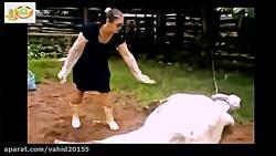 حملات فجیع حیوانات وحشی به انسان