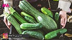 خواص و فواید کدو سبز از نظر طب سنتی