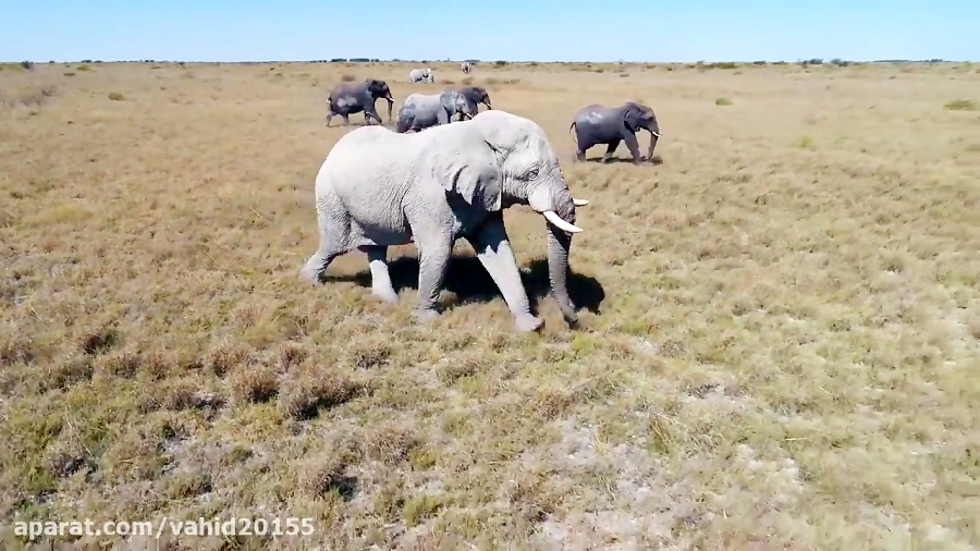 طبیعت و زیبایی های فوق العاده بوتسوانا