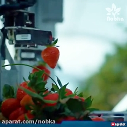 ربات هوشمند برداشت محصول