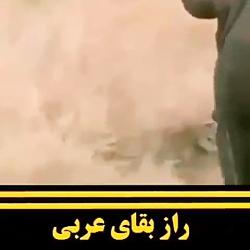 راز بقا عربی کلیپ طنز و خنده دار قسمت اول قسمت دوم قسمت سوم قسمت چهارم قسمت آخر