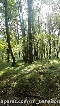 پیاده روی جنگل