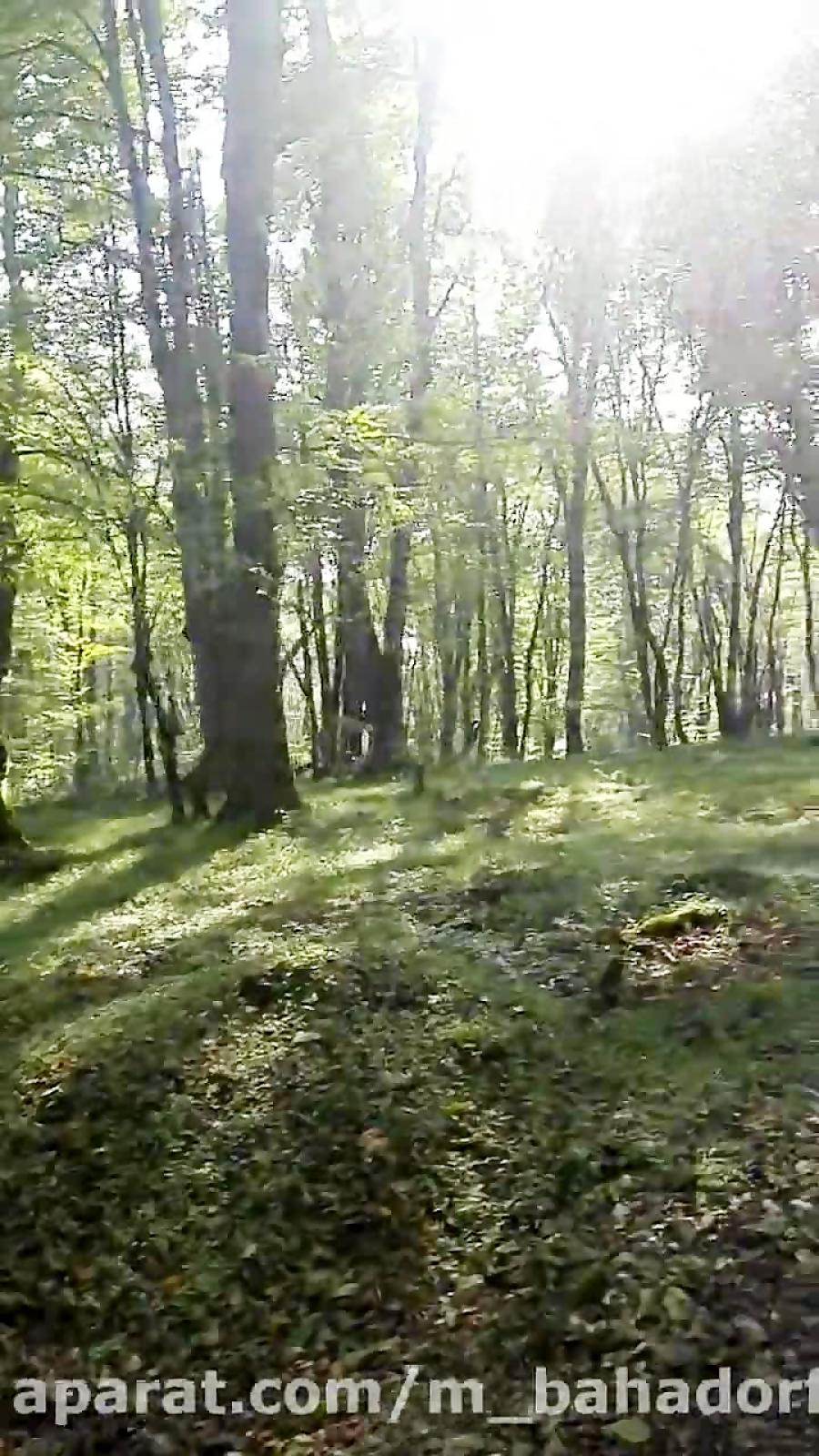 جنگل دریاچه ارواح