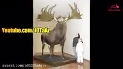 حیوانات منقرضی