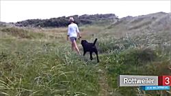 10 نژاد سگ مناسب طبیعت گ...