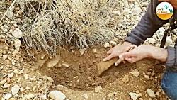 آموزش بذر کاری در طبیعت...