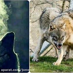 اسلاید شو ((wolf))