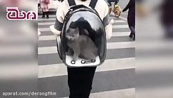 يك كيف عالي براي حيوانا...