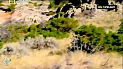 مستند فارسی - کشنده تری...