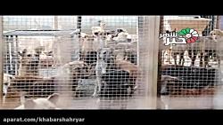 درخواست حامیان حیوانات...
