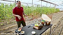 آشپزی در طبیعت 20 با رضا طاهری سالاد کاهو و انار در جاده ساوه