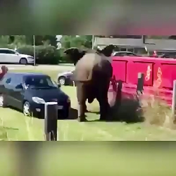 حوادث واقعی