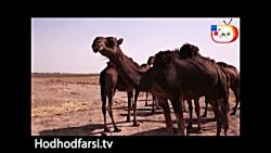 شبکه جهانى هدهد - کلیپ ح...