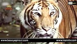 جهان ما ،حیوانات وحشی ،...