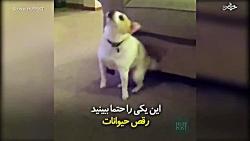 وقتی حیوانات می رقصند.