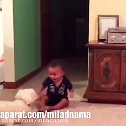 رابطه سگ با کودک ها
