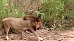 هفت قدرتمند در آفریقا- مستند حیات وحش