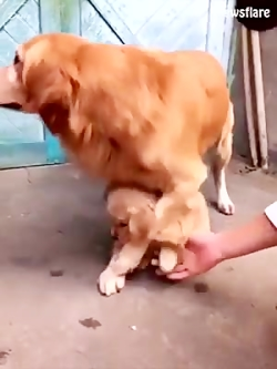 بچه داری حیوانات