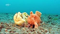 در زیر دریا چه خبر است ؟
