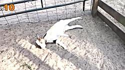 حیوانات و اتفاقات
