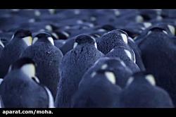 مستند خاندان ها ۲ - پنگوئن امپراتور