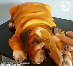 این حیوانات در واقع کیک...