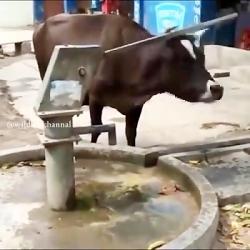 حیوانات از هوش خود برای...