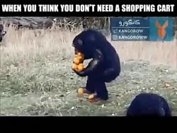 کلیپ خنده دار  وقتی میری خرید و فکر میکنی به سبد خرید نیاز نداری