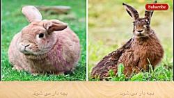 حیوانات مشابه اما متفا...