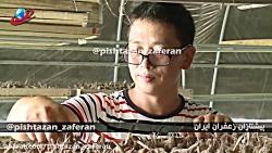 آموزش زعفران گلخانه ای - گزارش کارآفرین چینی