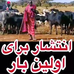 قبیله ای در آفریقا که ش...