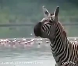 آواز خواندن حیوانات