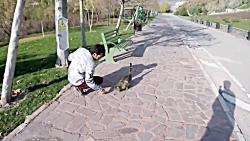 مهربانی با حیوانات