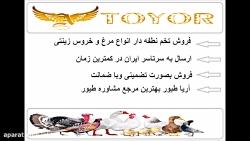 فروش تخم نطفه دار تازه و سالم طوطی کاسکو و طاووس
