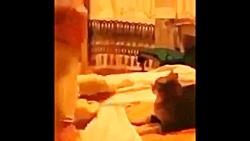 کتک خوردن گربه از بچه