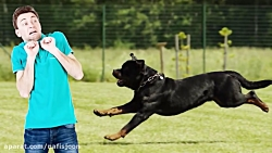 وحشی ترین و خطرناک ترین نژادهای سگ