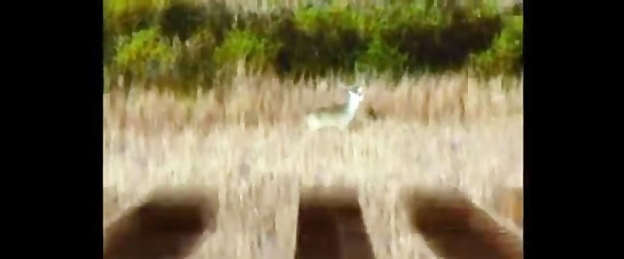 آنونس فیلم سینمایی افسانه شکارچی آهوی دم سفید
