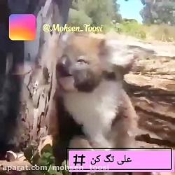 علی جان ملیح جان
