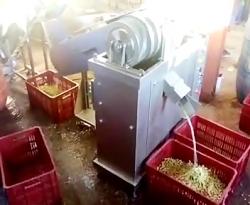 دستگاه تمام اتوماتیک هسته گیر زیتون