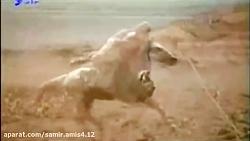 نوای کربلایی امیر حسین ...