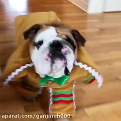 خوش تیپ ترین سگ دنیا
