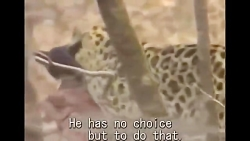 حمله حیوانات وحشی به سگ...