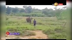 حمله مرگبار فیل به مرد جوان