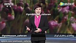 گزارش کشت گلخانه ای زعفران از شبکه CCTV 2 چین