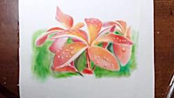 Drawing Plumeria flowers -- Oil painting d...