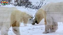 مستند شکارچیان حیات وحش فصل اول :: قسمت سوم ::