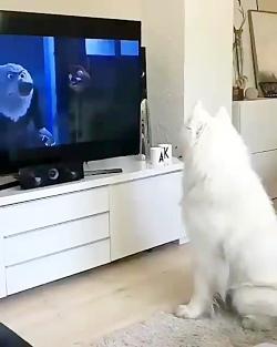 سگ بامزه  جلو تلویزیون