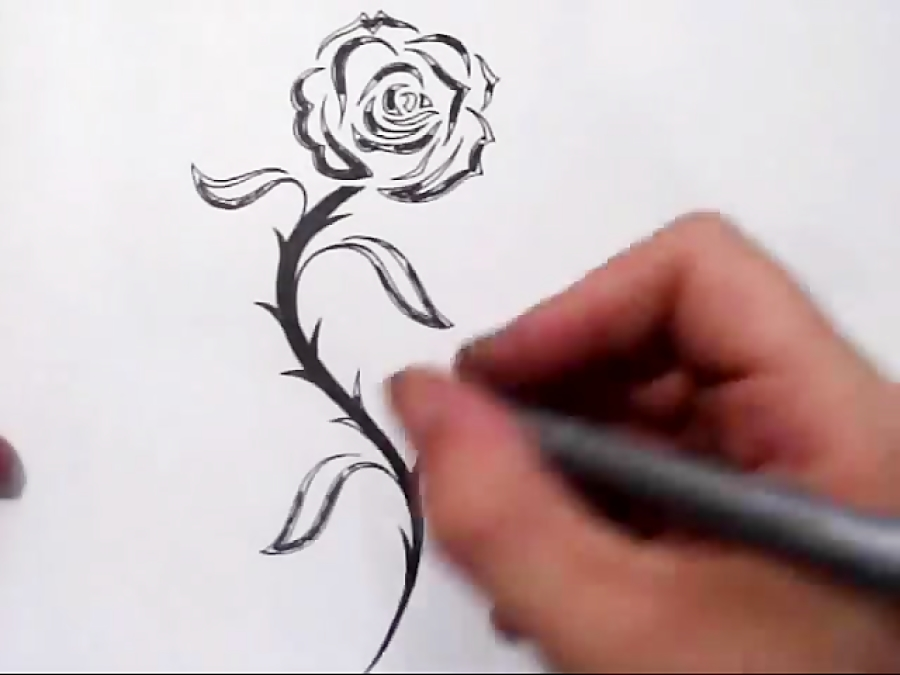 pencil outline drawings of flowers