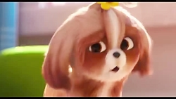 انیمیشن زندگی حیوانات ...
